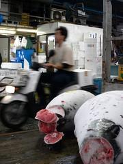Tokyo 2008 - 築地 (8)