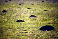 ant mounds
