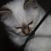 Remco's kitten 12