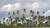 I guardiani del cielo (Franco Ferri Mala) Tags: africa travel sky colour landscape nikon place cielo zanzibar palme flickrlovers goldenvisions