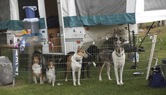 Dogs and the Camp