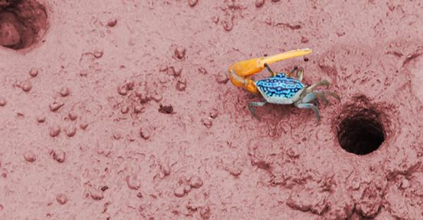 (Pulau Ketam) Crab Island