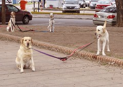 Lazos (carlos_ar2000) Tags: street dog argentina look lazo calle buenosaires tie rope perro recoleta bond leash mirada glance correa carlosredondo credondo carlosalbertoredondo carlosaredondo