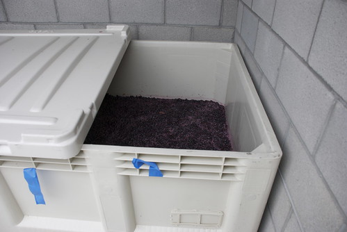 Thats a sh*tload of Cinsault. Well, actually, it isnt. We planted so little of this blending grape that it barely fills a quarter of the fermentation vat. Which means its taking its time warming up.