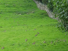 How many rabbits can you spot? (D  a  v  e) Tags: pictures camera rabbit dave digital computer photography photo pix view image photos pics picture images photographs photograph views directions warren info jpg jpeg information facts jpgs jpegs picsof picturesof imageof pictureof photographof sumpner imagesof photographsof directionsto