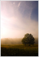 Lone Tree On The Beall Trail ([Christine]) Tags: mist field westvirginia lonetree canaanvalley canaanvalleynationalwildliferefuge bealltrail