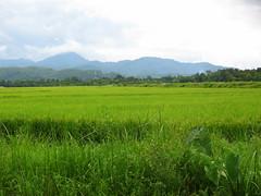 Penang Organic Farm Centre