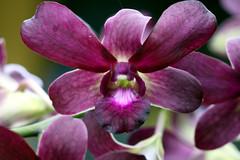 purple (xeno(x)) Tags: light orchid color macro art canon asia 2008 excellence xeno bej 40d mywinners abigfave magicdonkeysbest