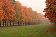 Dresden (Bert Kaufmann) Tags: color colour fall colors germany garden deutschland dresden colours schloss allemagne garten duitsland schlossgarten pillnitz kasteeltuin schlosspillnitz dragondaggerphoto