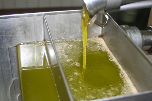 Olive Oil_7323