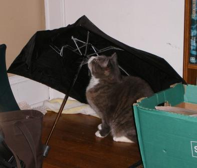 LB Sits Under My Broken Umbrella