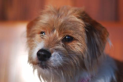 Meet Pippa