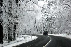 Cool whites (Elisabeth de Ru) Tags: winter snow sneeuw neige veluwe gelderland hoenderloo celisabeth85flickr n304 coolwhites celisabeth|ejk elisabethderu