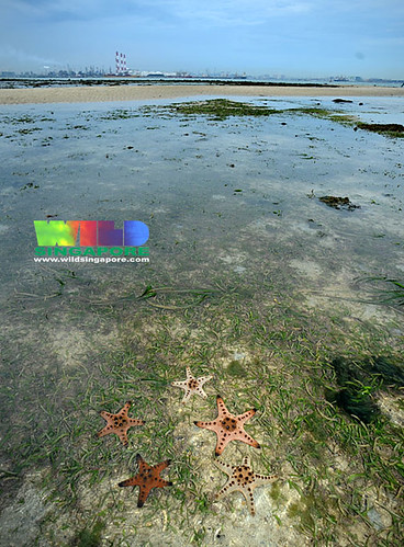 Living seagrass meadows of Cyrene Reefs