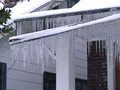 Icicles on Beacon Avenue. Photo by Wendi.