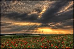 Mohnfeld (EtE-ART) Tags: sunset summer sky flower colour art nature field clouds contrast germany landscape deutschland photography foto sonnenuntergang sommer natur feld himmel wolken blumen dslr blume landschaft hdr mohn mohnfeld sigma1850mm sachsenanhalt canoneos50d völpke eteart