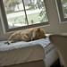 柴犬:lazy sunday
