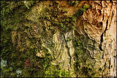 treescape (vcrimson) Tags: winter red england tree texture landscape moss buxton pattern derbyshire peakdistrict greeen