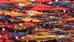 koi (doug.siefken) Tags: city urban fish chicago abstract art painting geotagged photo moving artwork colorful long flickr foto image doug favorites content images r fotos koi form douglas streeterville nontraditional emergent chicagoan siefken dougsiefken douglasrsiefken justchicagoart