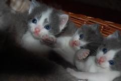 Synchronised cuteness!