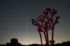 Coachella Spotlight