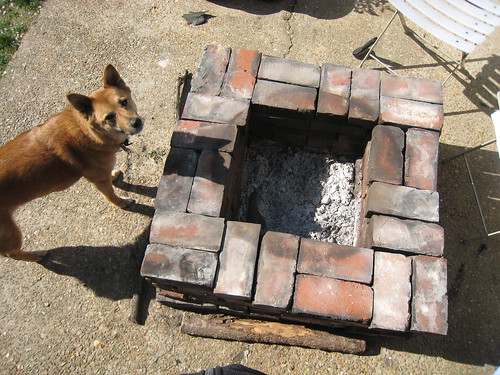 Kuma checks out the fire pit