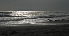 Mare a Ladispoli (stefano.vesco) Tags: mare visible controluce ladispoli nikond80 18200mmf3556gafsdxvrifednikkor pn00930