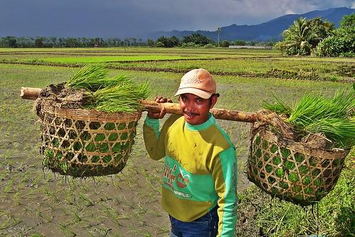 farmer farm pingga rice farming rural seedling area Pinoy Filipino Pilipino Buhay  people pictures photos life Philippinen  菲律宾  菲律賓  필리핀(공화국) Philippinesrural