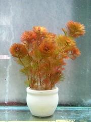 Thủy Sinh Tuấn Anh-Chuyên cây & Rêu Thủy Sinh, Cá Cảnh Biền & Hồ Cá Cảnh Biển - 23