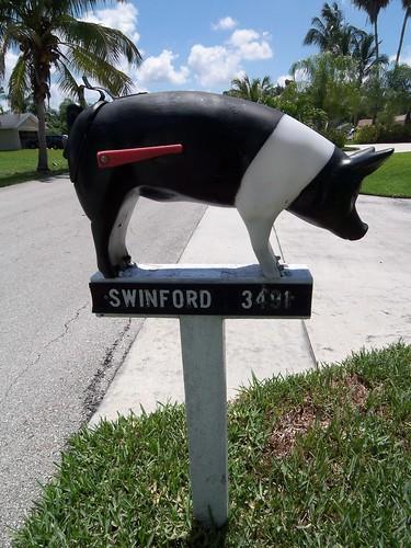 Pig in Bonita Springs
