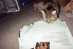 """Bonnie Studies """"The Jaguar"""""""