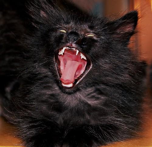 Graaaaaaahhhhhhhhhh!!!