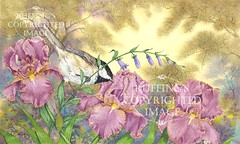 """Chickadee, Iris, and Creeping Bellflower"" AER4 by A E Ruffing"