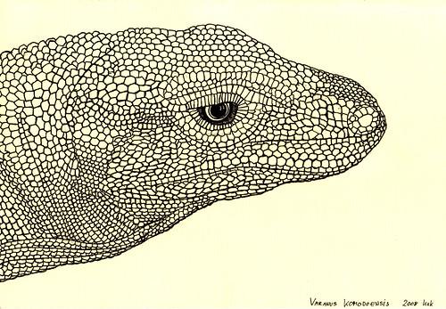 goana / monitor lizard / varanus komodoensis