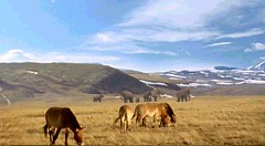 11 horses