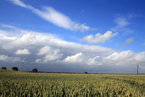 blue skies over corn fields by antaean