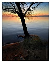 Pôr-do-sol no Guaiba (hades.himself) Tags: nikon portoalegre tokina pôrdosol luis d200 árvore riograndedosul baretree silhueta guaiba sulfotoclube capturenx balbinot atx116prodx af1116mmf28