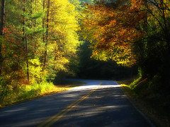 Autumn Leaves Along South Carolina Highway 28 - Oconee County (olympusjgreen) Tags: road autumn trees light sunlight color fall sc nature beautiful yellow highlands highway colorful path southcarolina upstate carolina oconee sc28