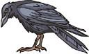 crow (3doel82) Tags: fish bird animals insect gambar koleksi ikan belajar burung binatang carnivora serangga mamalia amphibi