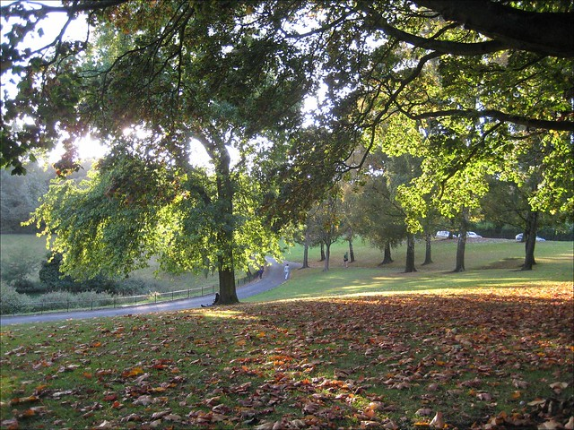 Phoenix Park in autumn