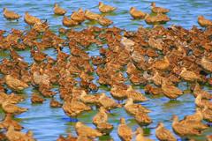 Birds of a feather flock together (Cepreu K) Tags: flickrchallengegroup flickrchallengewinner