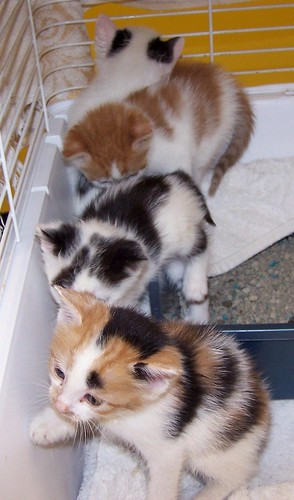 row_of_kittens