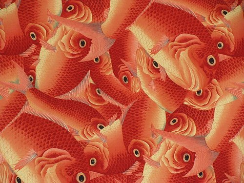 Carp [photo by Tania]