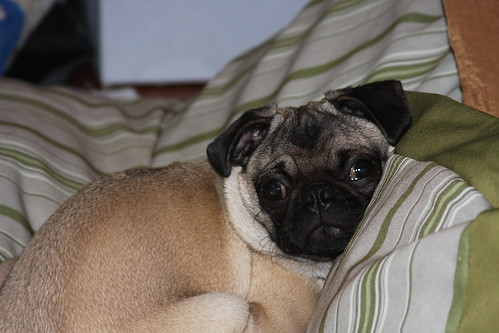 Nappin' Phoebe