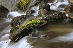 wet stone gathers moss (bertdennisonphotography) Tags: california white green nature water creek canon river moss rocks long exposure stones sierra eastern