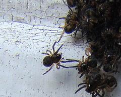 Macro baby spider