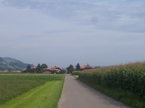 Cycling through the sweetcorn fields