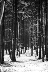 IMG_4160 (the.duch) Tags: wood blackandwhite panorama snow tree fall alberi landscape switzerland neve svizzera autunno aargau biancoenero collina boschi wohlenag eos400d
