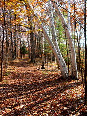 Sylvan Solace Trail (Artist Naturalist-Mike Sherman) Tags: park november fall photo day indiansummer midwestern midmichigan isabellacounty sylvansolace chippewavalleynatureconservancy
