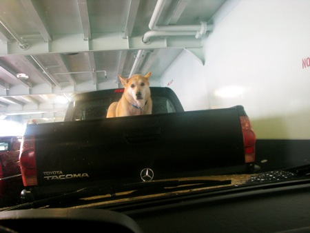 Whidbey Island Ferry Dog